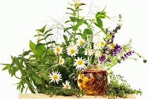 Saunaaufguss Selber Machen : saunaaufguss selber machen naturseife und kosmetik selber machen ~ Orissabook.com Haus und Dekorationen