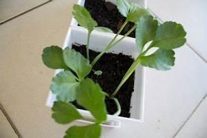 Ab Wann Erdbeeren Pflanzen : ranunkeln wann sollten sie sie pflanzen ~ Eleganceandgraceweddings.com Haus und Dekorationen