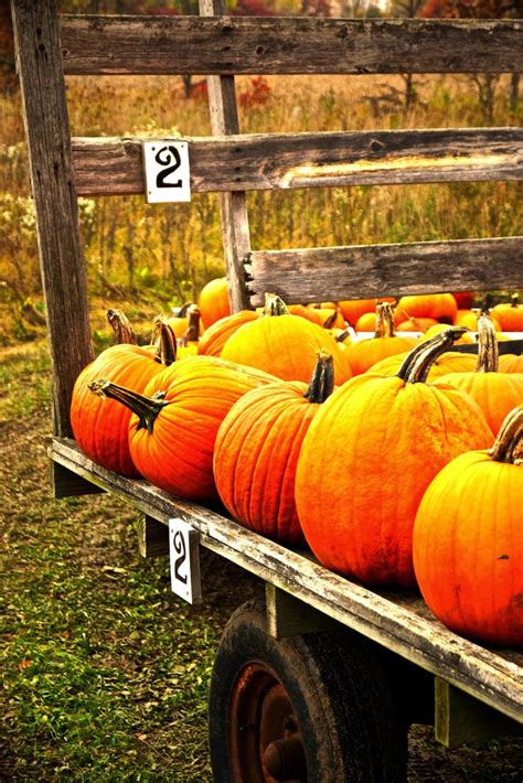 best 25 pumpkins for sale ideas on treats treats and
