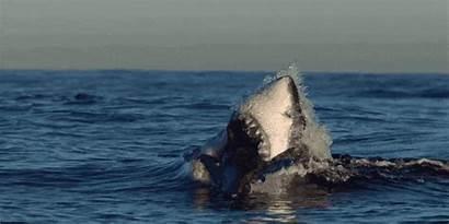 Sharks Shark Inverse