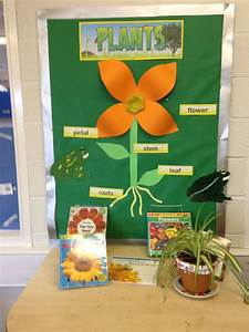 paper flower workshop year 1 science parts of the plants display classroom
