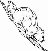 Coloring Beaver Coloringpages101 sketch template