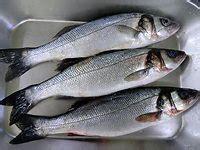cuisiner les patissons blancs les poissons les plus courants en cuisine