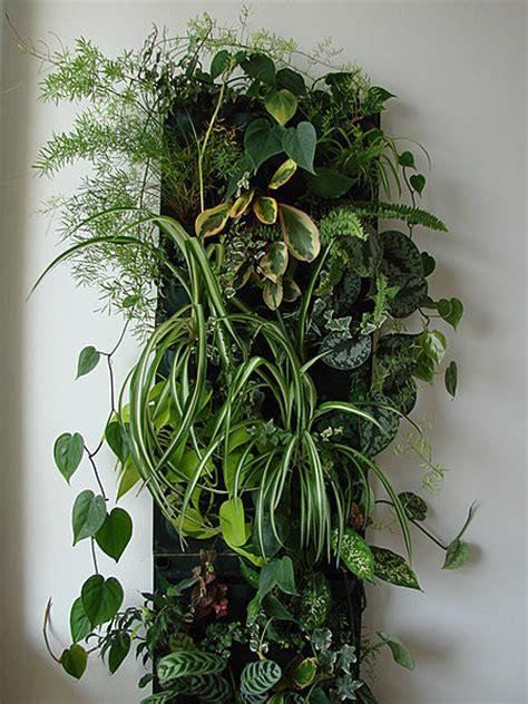 mur vegetal d interieur le mur v 233 g 233 tal des plantes 224 la verticale galerie photos d article 8 9