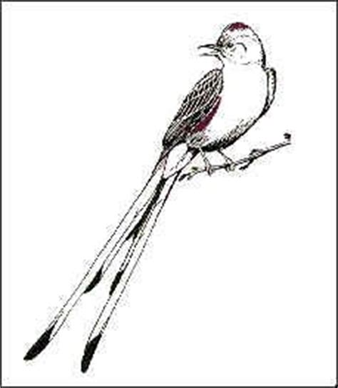 1000 images about scissor tailed flycatcher bird texas