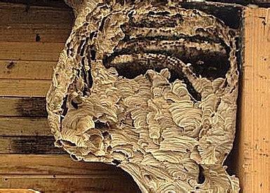 wespennest bek 228 mpfen beseitigen und entfernen