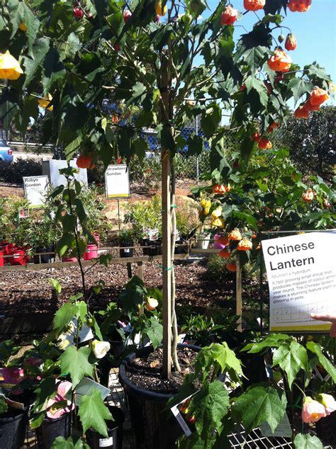 garden shopping gardens nursery brisbane