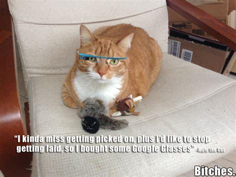 No Sex Meme - google glasses no sex mylo the cat know your meme