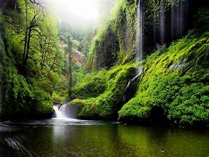 Spring, Landscape, Waterfall, In, Oregon, Usa, Nature, River