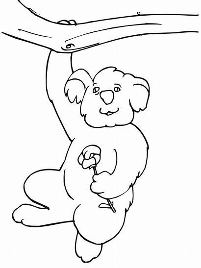 Koala Coloring Pages Funny Bear Hanging Tree