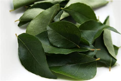 Karipatta Curry Leaves   Spices   Maunika Gowardhan