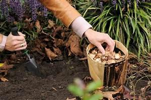 Planter Des Bulbes : jonquille narcisse plantation culture et entretien ~ Dallasstarsshop.com Idées de Décoration