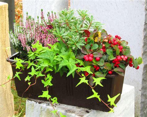 Pflegeleichte Balkonpflanzen Ganzjährig by Bepflanzter Blumenkasten 40 Cm Wintergr 252 N Pflanzen