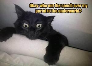 Halloween Humor « witchlike