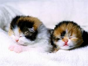 Damn cute cats!!!!!!!!!!!!! - Cute Kittens Photo (9807211 ...
