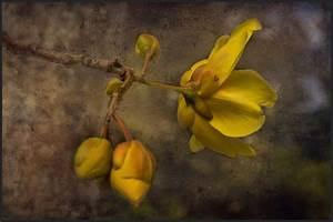 Die Farbe Gelb : die farbe gelb foto bild januar composing pflanzen bilder auf fotocommunity ~ Watch28wear.com Haus und Dekorationen