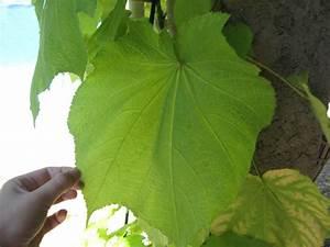 Grande Plante Verte : grande plante verte mais j ai oublier son nom ~ Premium-room.com Idées de Décoration