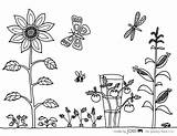 Coloring Garden Vegetable Sheet Pages Sheets Drawing Printable Gardening Colouring Joel Flower Flowers Template Printables Tools Malvorlagen Simple Vegetables Realistic sketch template