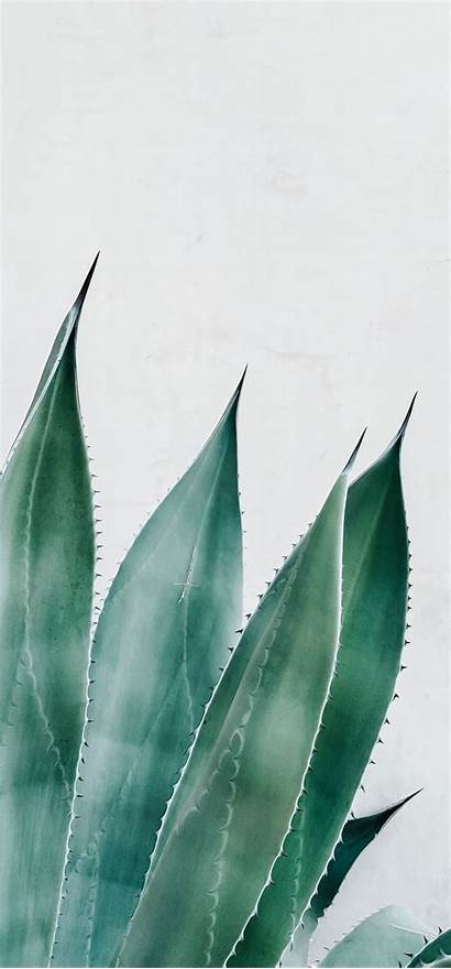 Succulent Plant Aloe Wallpapers A21s Samsung Spark