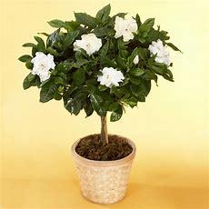 Indoor Plants  House Plants