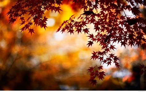 Autumn sun trying to peek through fall foliage. 55+ Hello Autumn Aesthetic HD Wallpapers (Desktop ...