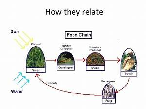 Food Web Of African Elephant
