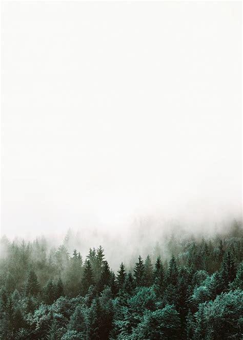 schöne bilder kaufen poster mit fotokunst natur und waldfotografie sch 246 ne