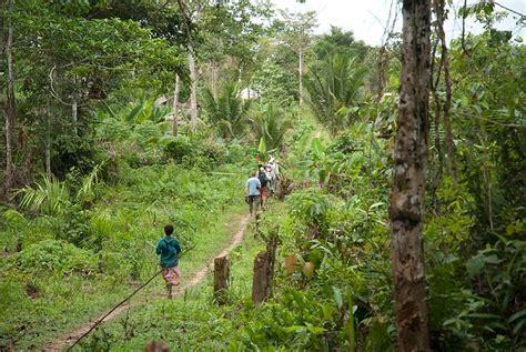 Fotos/Travel/Papua New Guinea 2009/Kwatu lodge forest ...