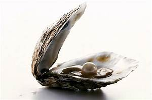MSN: Oyster biggest pearl