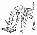 Giraffe Coloring Pages Printable sketch template
