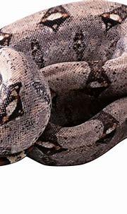 Bem Fácil PNG : Cobras PNG