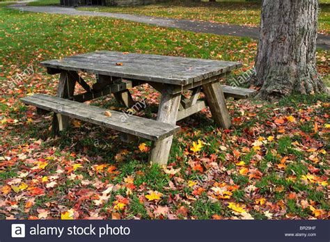 parks with picnic tables near me picnic table and fallen leaves allegany state park new