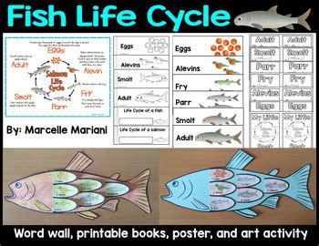 fish cycle activity word wall posters and