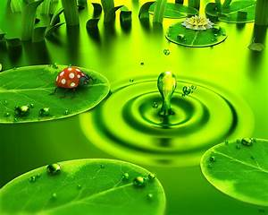Green Leaves Water Drops Wallpapers | PIXHOME
