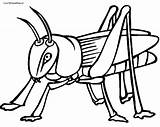 Cricket Coloring Insect Printable Getcoloringpages Sheet Jiminy sketch template