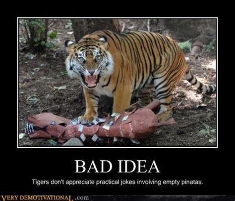 Terrible Tiger Meme - terrible tiger memes image memes at relatably com