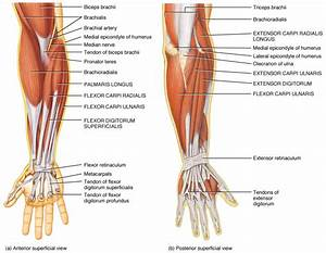 Anatomy4fitness  Give Yourself A Hand