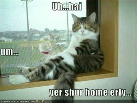 Drunk Cat Meme - funny pictures cat drinking wine youtube