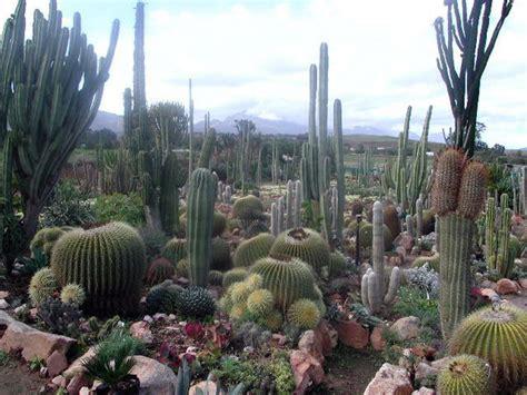 cactus gardens succulent gardens ferrebeekeeper