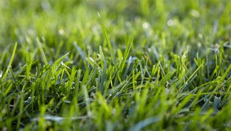 Get Your Lawn Moss-free (and Keep It That Way) In 4 Easy