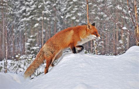 Animal Winter Wallpaper - archive for december 2012