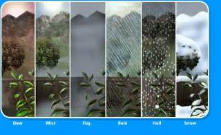 Type of Water Cycle Precipitation