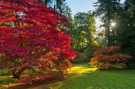 what tree leaves turn in fall 12 spectacular places to watch the leaves turn in the uk