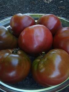 Tomate Noir De Crimée : tomate noire de crim e le potager ornemental de catherine ~ Dailycaller-alerts.com Idées de Décoration