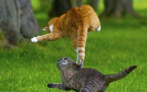 funny cat fight  desktop wallpaper funnypictureorg