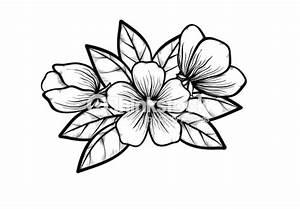 Dessin Fleur De Cerisier Japonais Noir Et Blanc : branche dun arbre en fleurs dans un style noir et blanc ~ Melissatoandfro.com Idées de Décoration