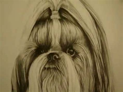 shih tzu puppy graphite pencil drawing youtube