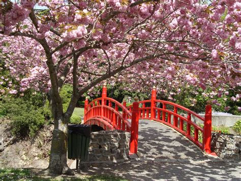 cherry blossom garden my garden haven a fine romance garden features in new zealand