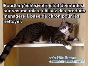 Mon Secret Pour Empcher Mon Chat De Grimper Sur Les Meubles