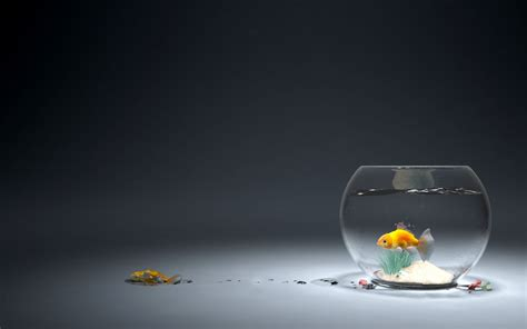 3d Animal Wallpaper 3d Fish Wallpaper - goldfish wallpapers wallpapersafari